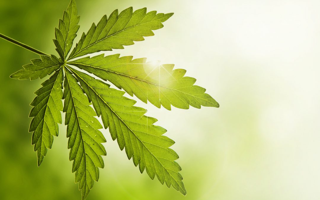 Die Wiederentdeckung von Cannabis